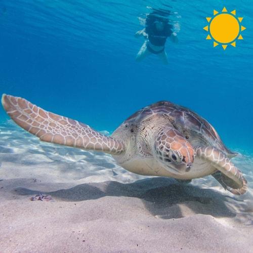 schildpadden klein curacao